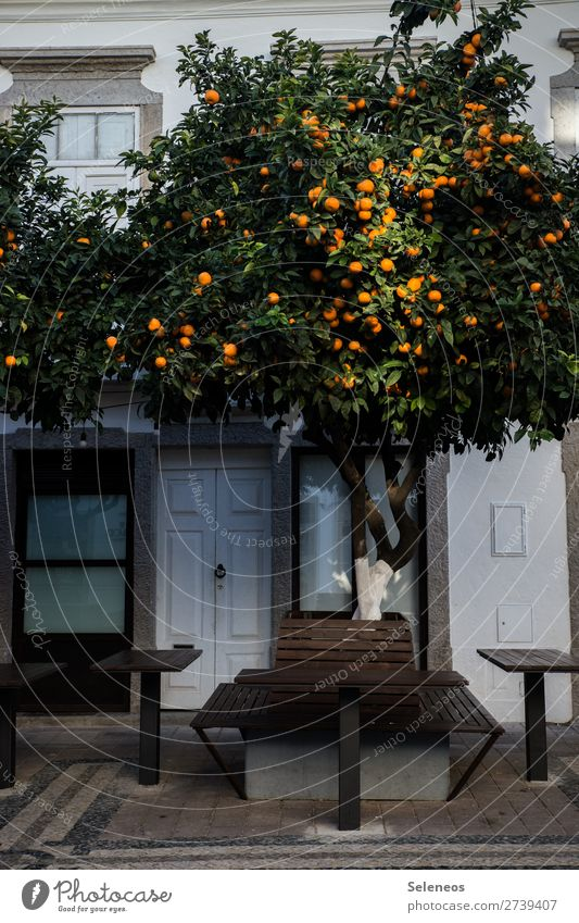 Schattenplatz Obst Obstbaum Baum Platz Bank Tisch Stadt Portugal Lissabon Haus Außenaufnahme Farbfoto Herbst Winter Ferien & Urlaub & Reisen Tourismus