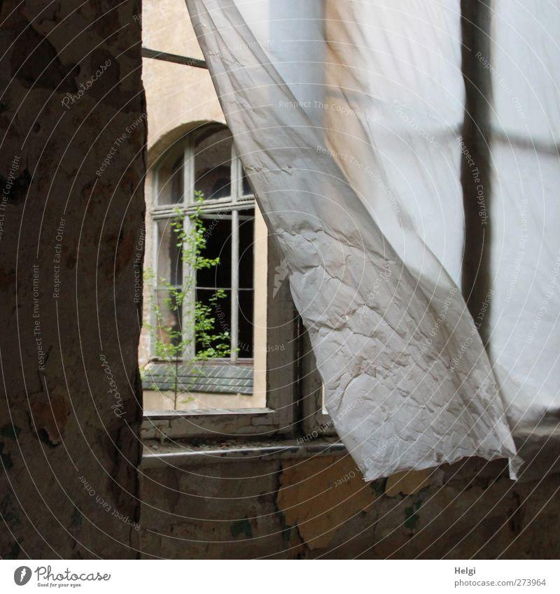 AST 5 | das Fenster zum Hof... Pflanze Baum Bauwerk Gebäude Architektur Mauer Wand Vorhang Stein Kunststoff alt beobachten Bewegung hängen Häusliches Leben