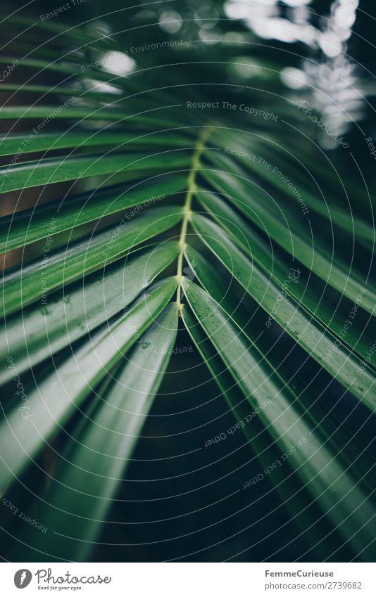 Leaf of a palm tree Natur Strukturen & Formen Muster Blatt Palme Blattgrün Palmenwedel Stengel Gewächshaus Botanischer Garten Grünpflanze Farbfoto Innenaufnahme