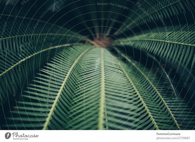 Leaves of a fern Natur Strukturen & Formen Farn Echte Farne Farnblatt Grünpflanze grün Pflanze Botanischer Garten Gewächshaus Muster Blatt Farbfoto