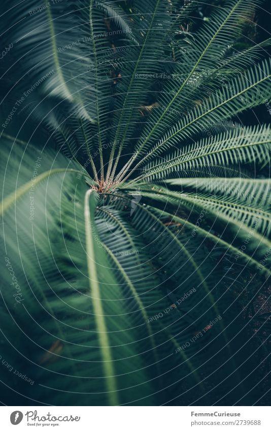 Leaves of a fern Natur grün Muster Strukturen & Formen Farn Echte Farne Farnblatt Grünpflanze Gewächshaus Botanischer Garten Botanik Farbfoto Innenaufnahme