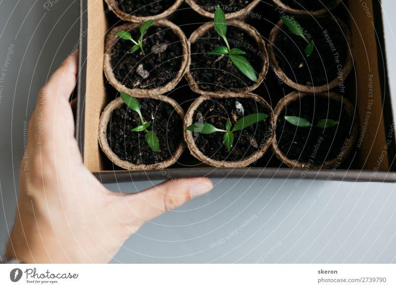 Sommer Pflanze grün Blatt Lifestyle Umwelt Liebe Frühling natürlich Gras Garten Arbeit & Erwerbstätigkeit Stimmung Freizeit & Hobby Erfolg Schönes Wetter
