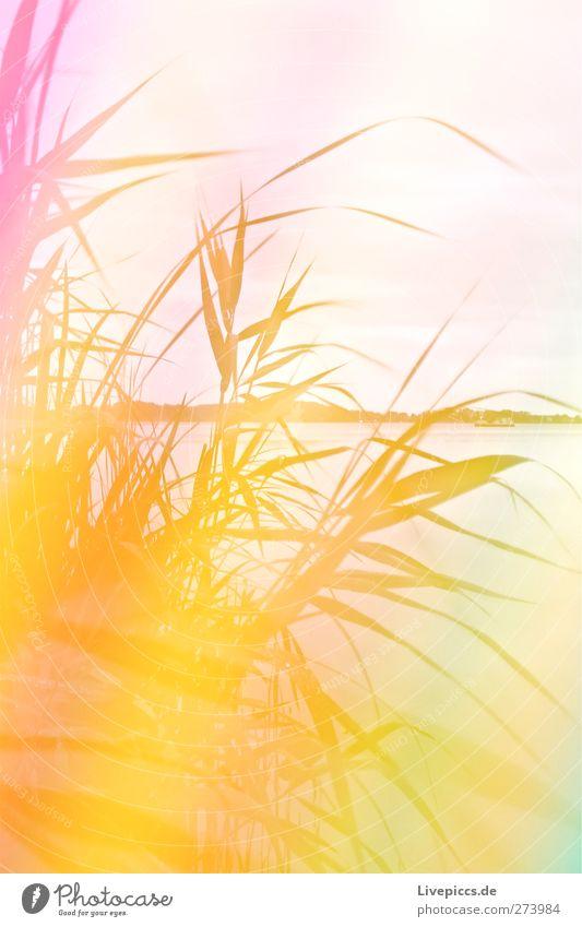 Müritzsicht mit Licht Himmel Natur Wasser Sommer Pflanze Strand Blatt Wolken Umwelt Landschaft Gras Küste See Kunst Wetter rosa