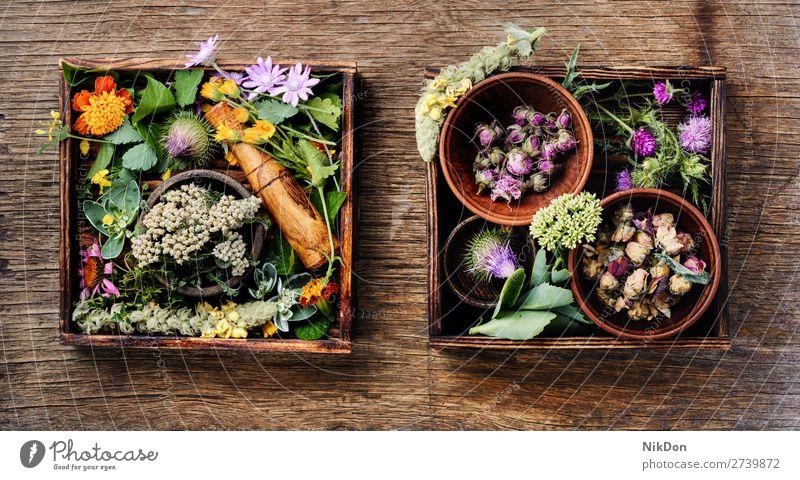 Kräuter Medizin Blumen Kraut Kräuterbuch Pflanze natürlich Gesundheit medizinisch Behandlung organisch hölzern langes Banner grün Heilkräuter altehrwürdig