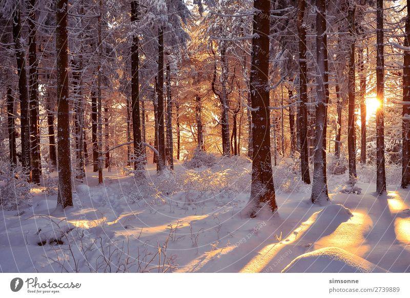 Romantischer Winterwald verschneite Bäume Sonne Schnee Weihnachten & Advent Landschaft Nebel Schneefall Baum Wald Wege & Pfade kalt weich Idylle Ziel