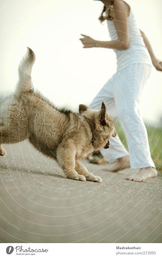 Spielgefährten feminin Kind Mädchen Kindheit Leben 1 Mensch 8-13 Jahre Wege & Pfade Haustier Hund Welpe Elo Tier Tierjunges fangen laufen Spielen toben