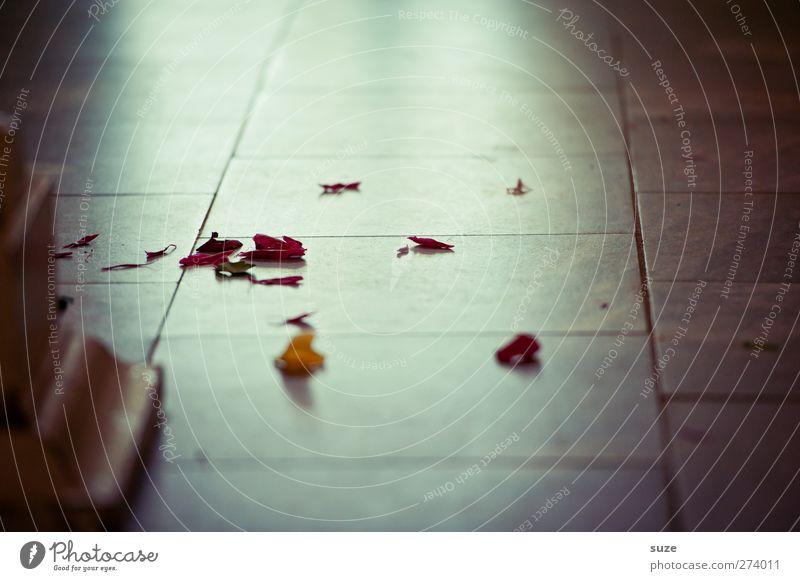 Blütenreste vom Hochzeitsfeste Feste & Feiern liegen dunkel Romantik Anlass Steinboden Boden Fliesen u. Kacheln Lichteinfall Rest Dekoration & Verzierung