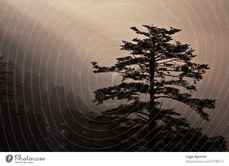 Lichtfluten Natur Ferien & Urlaub & Reisen Pflanze Baum Landschaft Winter Wald Berge u. Gebirge Umwelt Gefühle Stimmung träumen Tourismus Nebel Luft Eis