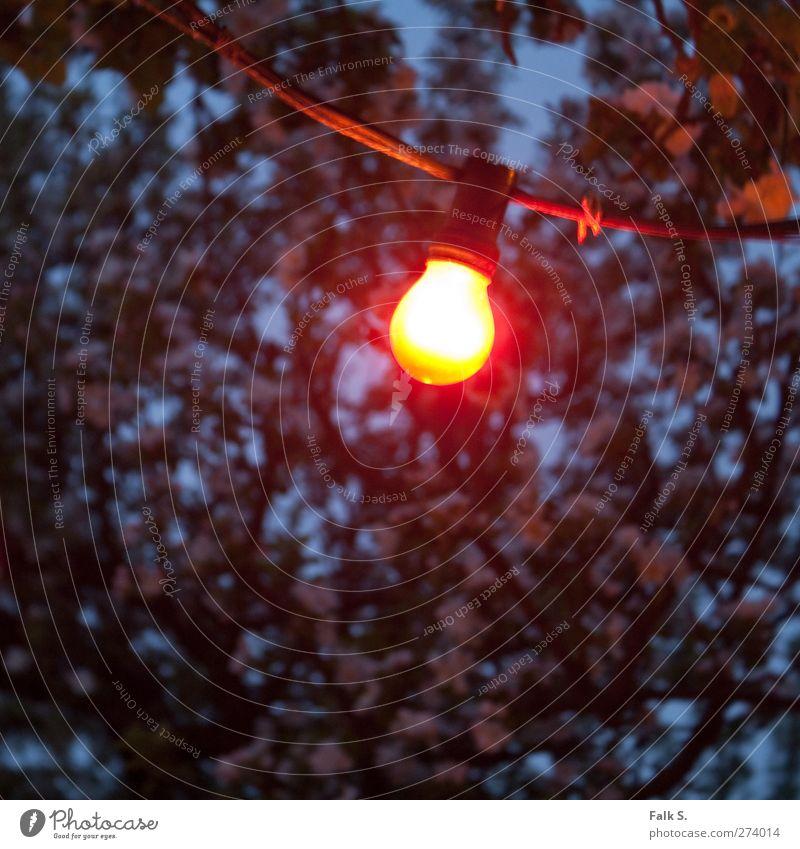 Ohne Titel blau Baum rot schwarz gelb Wärme kalt Frühling Holz Blüte Garten hell Metall Glas Energie Warmherzigkeit