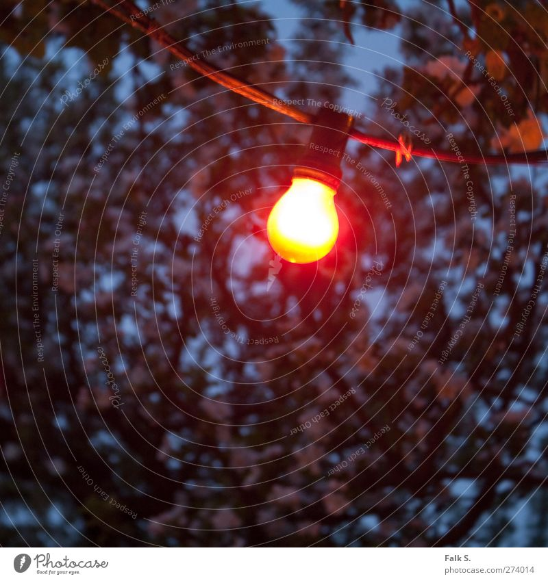 Ohne Titel Garten Kabel Glühlampe lichterkette Glühbirne Frühling Baum Blüte Holz Glas Metall Kunststoff hell kalt trist Wärme blau gelb rot schwarz