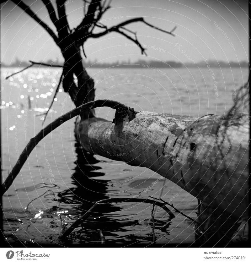 im Licht vergehen Angeln Schwimmen & Baden Kunst Skulptur Natur Landschaft Urelemente Wasser Frühling Klima Baum Wellen Flussufer Havel Kleinstadt