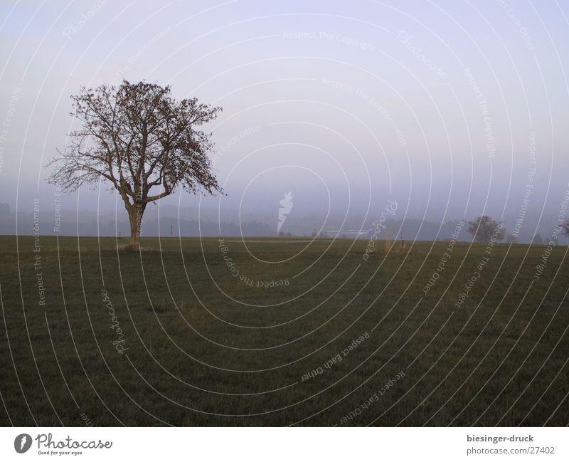 Nebelbaum Baum Einsamkeit Wiese Landschaft Nebel Trauer