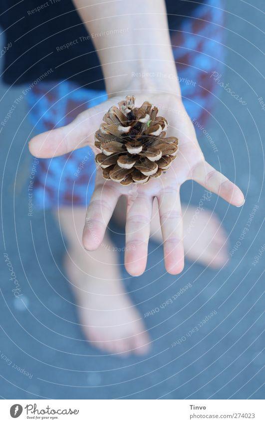zapfiger Sommer Kind Hand Finger 1 Mensch Schönes Wetter blau braun schwarz Zapfen Pflanzenteile offen Shorts Kinderhand kalte Farben vorzeigen haltend