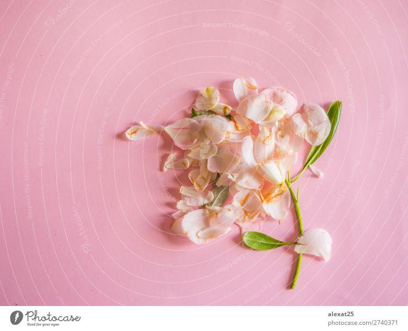 Natur Pflanze grün weiß Blume Blatt Liebe natürlich Traurigkeit Feste & Feiern rosa Dekoration & Verzierung Aussicht Geburtstag Hochzeit Postkarte