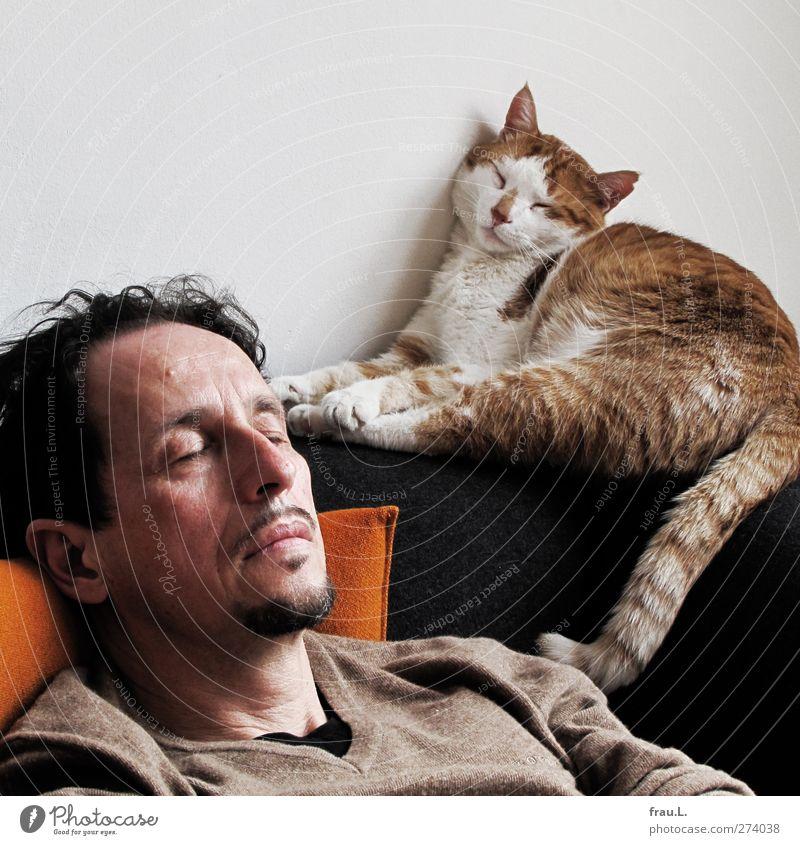 Schlafende Häusliches Leben Freundschaft Kopf 1 Mensch 45-60 Jahre Erwachsene Tier Haustier Katze schlafen träumen Zusammensein braun Zufriedenheit Vertrauen
