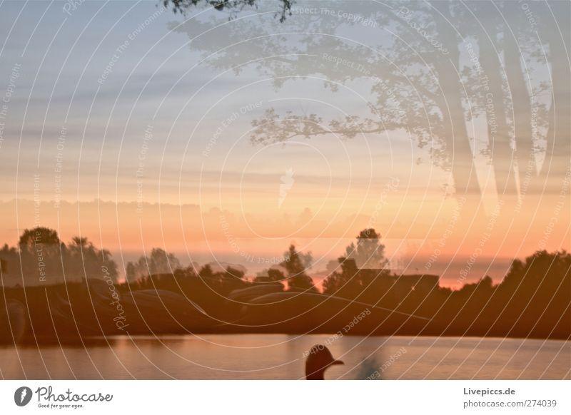Entenjagd Natur Landschaft Wasser Himmel Wolken Sonne Sonnenaufgang Sonnenuntergang Sonnenlicht Sommer Schönes Wetter Pflanze Baum Sträucher Wildpflanze Seeufer
