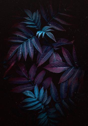 Natur Sommer Pflanze blau Blatt Winter Herbst Garten Dekoration & Verzierung frisch Beautyfotografie Konsistenz geblümt