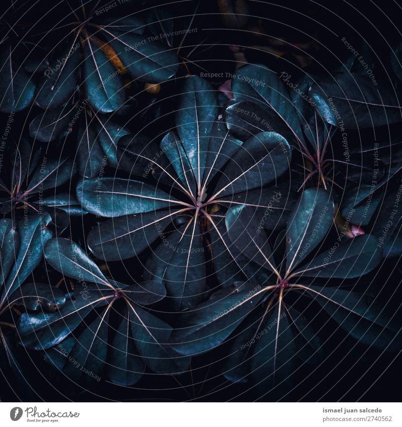 Pflanze Blätter Textur Blatt blau Garten geblümt Natur Dekoration & Verzierung abstrakt Konsistenz frisch Außenaufnahme Hintergrund Beautyfotografie