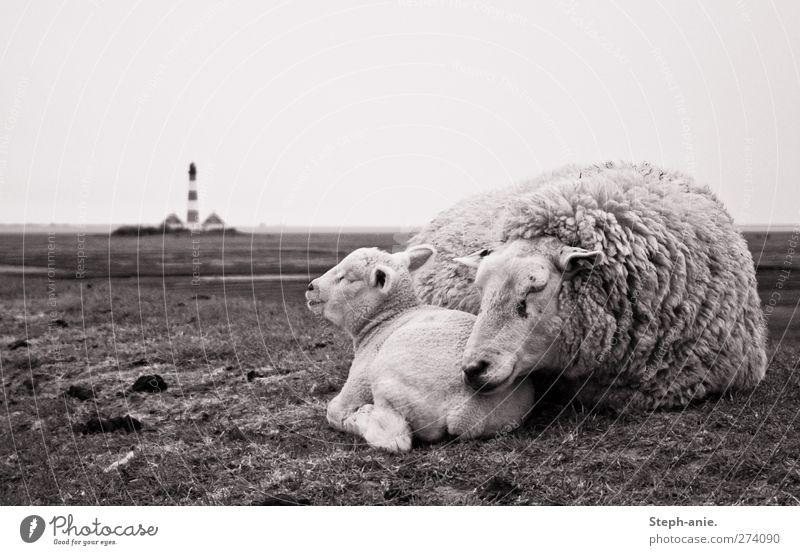 Zweisamkeit Tier Erholung Liebe Gras Tierjunges Zusammensein Regen Wind authentisch schlafen Sicherheit Turm weich Fell Hügel Vertrauen
