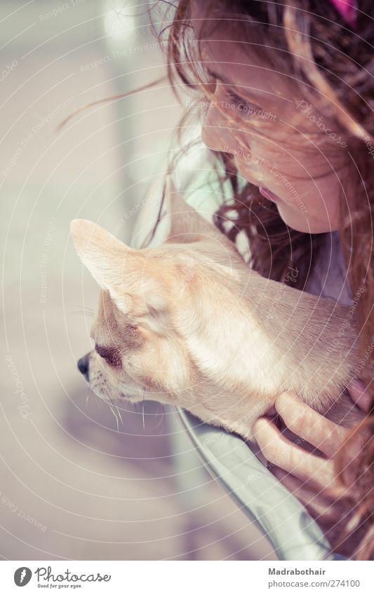 Zuschauer Hund Mensch Kind Mädchen Tier feminin klein Kopf Freundschaft Zusammensein Kindheit niedlich Team Neugier 8-13 Jahre Haustier