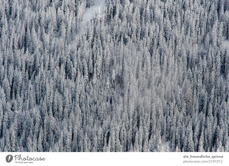Winterlabyrinth Natur Landschaft Pflanze Schönes Wetter Wind Schnee Baum Wildpflanze Innsbruck Österreich Europa oben unten grau grün weiß Abenteuer Einsamkeit