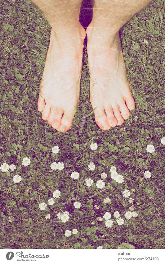 Sommerfüße maskulin Haut Beine Fuß Pflanze Gras Gänseblümchen Wiese stehen warten nackt Warmherzigkeit ruhig träumen Gefühle Zufriedenheit gleich Leichtigkeit