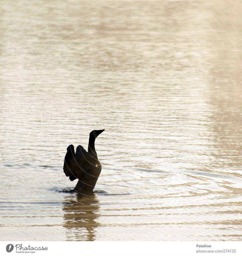 Streck dich! Umwelt Natur Tier Urelemente Wasser Küste Seeufer Teich Wildtier Vogel Flügel 1 hell nass natürlich Gans gefiedert Feder Schnabel Farbfoto