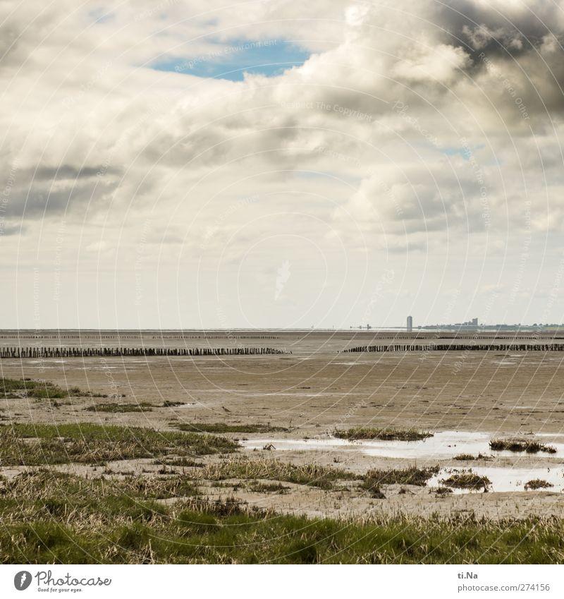 einfach mal die Seele baumeln lassen Umwelt Natur Landschaft Pflanze Tier Wasser Himmel Wolken Gewitterwolken Frühling Sommer Wetter Gras Küste Nordsee frei