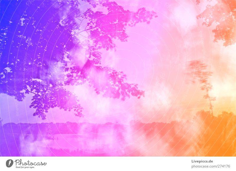 4:2 yeah!!! Kunst Künstler Maler Umwelt Natur Landschaft Wasser Himmel Wolken Sommer Wetter Schönes Wetter Pflanze Baum Gras Sträucher Blatt Wildpflanze Seeufer