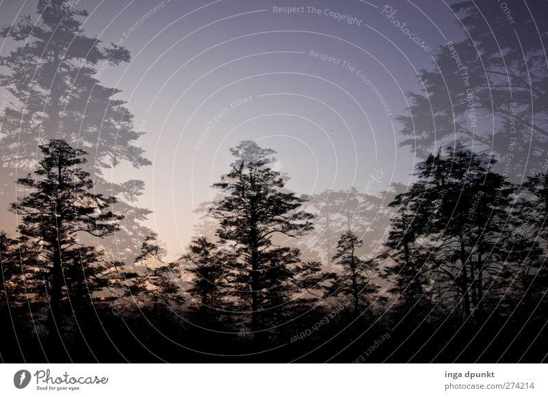 Schattenrisse Natur blau Baum Wald Umwelt Landschaft Berge u. Gebirge wandern Hoffnung fantastisch geheimnisvoll Glaube China Phantasie Sichuan