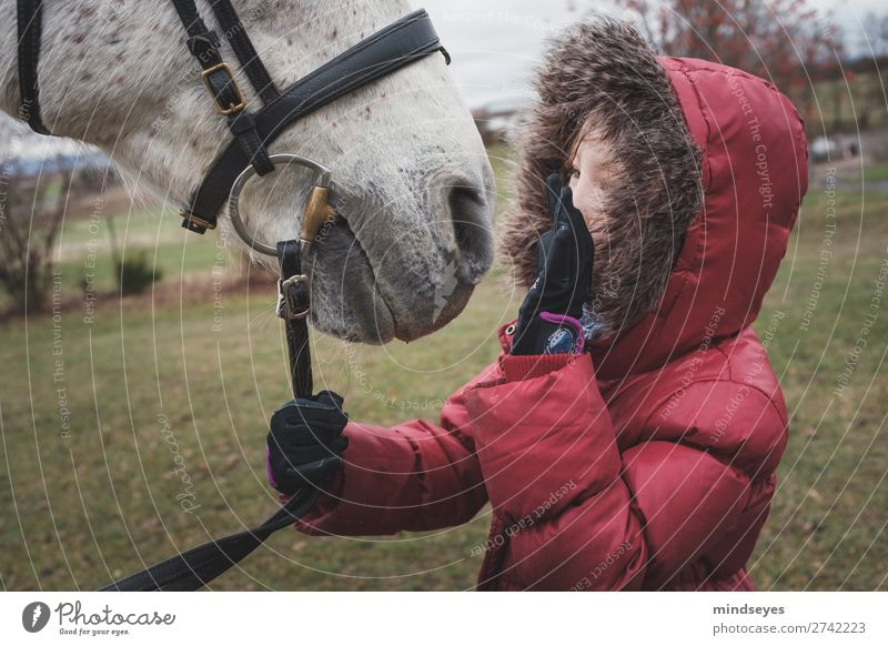 Mädchen in roter Winterjacke spricht mit ihrem Pferd Reiten feminin Kind Kindheit 1 Mensch 3-8 Jahre Natur Wiese Jacke Fell Kapuze Tier berühren sprechen