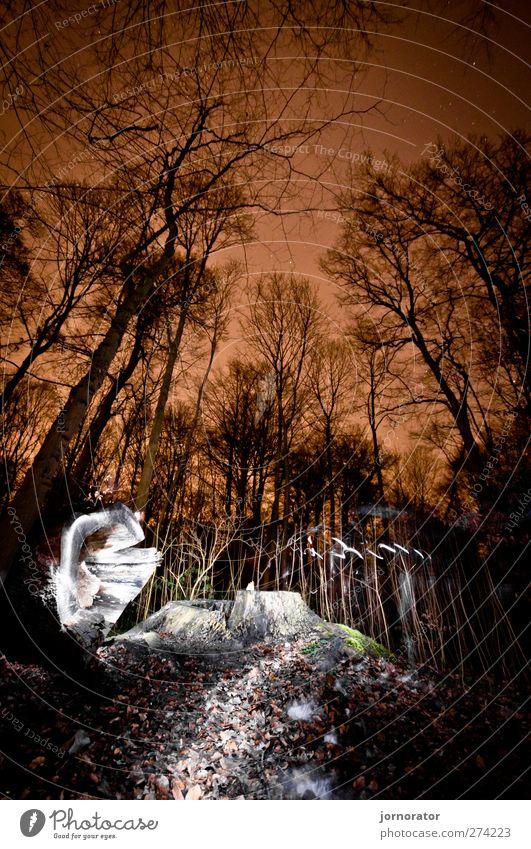 Lightscribe Art III - Illuminated Forest Natur orange schwarz weiß dunkel geheimnisvoll Beleuchtung Baumstumpf Wald sternenklar Stadtlicht Farbfoto