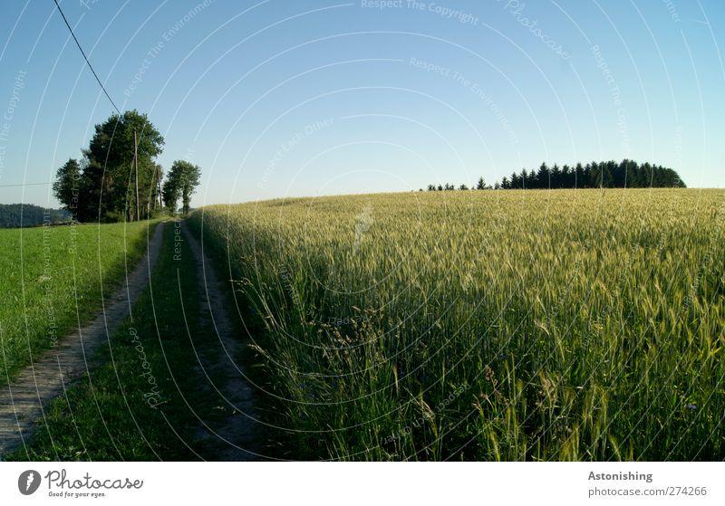 Weg Umwelt Natur Landschaft Pflanze Erde Sand Himmel Wolkenloser Himmel Horizont Sommer Wetter Schönes Wetter Baum Blume Gras Nutzpflanze Wiese Feld Wald