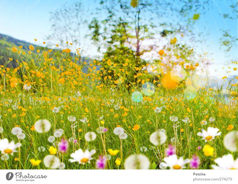 Blumenwiese Himmel Natur blau grün Baum Sonne Sommer Blume Farbe Landschaft gelb Berge u. Gebirge Frühling Fröhlichkeit Sträucher Löwenzahn