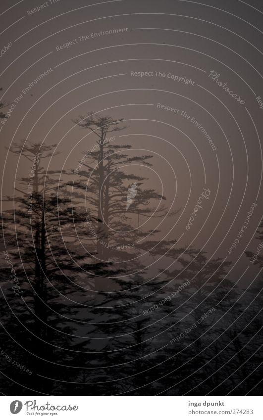 Schattenrisse II Natur Baum Pflanze Wald Umwelt Landschaft dunkel träumen außergewöhnlich Hoffnung Romantik fantastisch geheimnisvoll Glaube Asien Sehnsucht