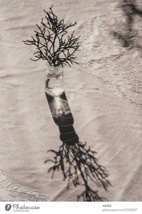 Abschied Pflanze Wacholder Zweig Vase Behälter u. Gefäße Tisch Tischwäsche Ornament Glas Kunststoff Traurigkeit Sorge Trauer Tod Schmerz Vergänglichkeit