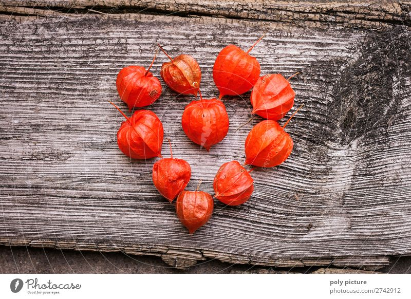 Herzform aus roten Physalis auf grauem Holz Natur Sommer Pflanze Landschaft Hintergrundbild Lifestyle Umwelt Liebe Frühling Zufriedenheit Zukunft