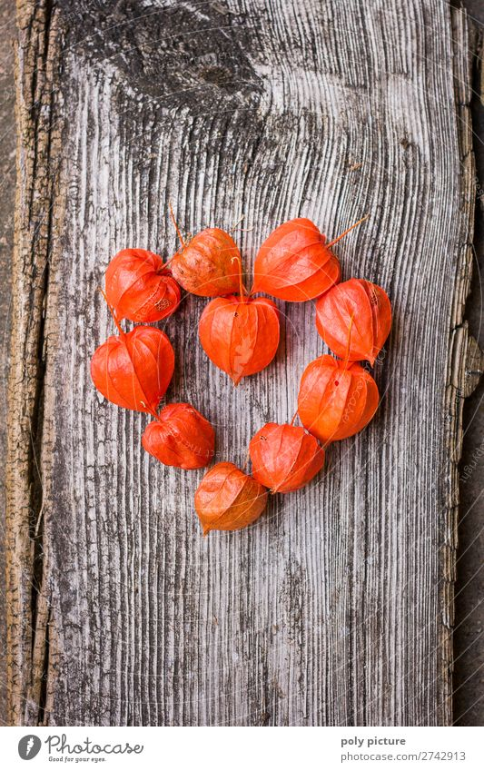Herzform aus roten Physalis auf grauem Holz Natur Pflanze Frühling Sommer Herbst Klimawandel Nutzpflanze Kitsch Krimskrams Zeichen Freude Glück Fröhlichkeit