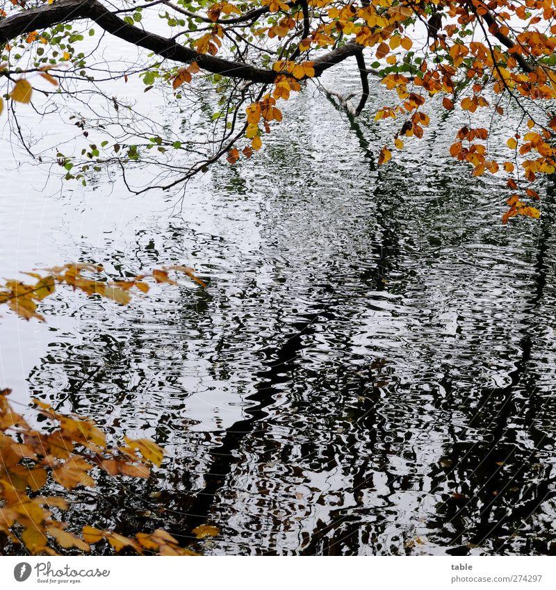 Herbst Natur Wasser weiß Baum Pflanze schwarz ruhig Wald Umwelt Landschaft dunkel Herbst Bewegung Holz See braun