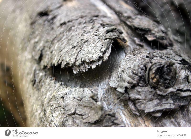 Madera vieja, oder war es doch die Meeresluft? Baumrinde Holz grau einzeln Ast alt verfallen Maserung leicht verwackelt