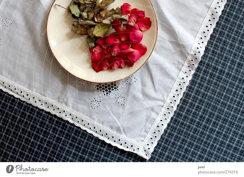 Blüten auf dem Teller serviert Pflanze Blume Rose Blatt Dekoration & Verzierung trocken blau grün rot weiß Trockenblume Spitze kariert Tischwäsche Farbfoto