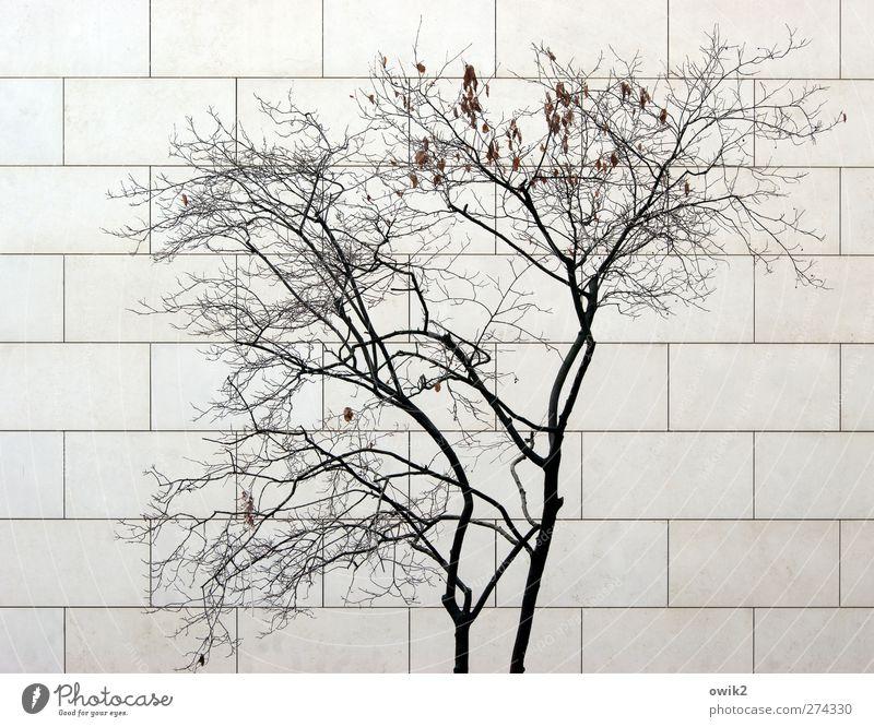 Nullwachstum Natur Pflanze Baum Zweige u. Äste Bauwerk Gebäude Mauer Wand Fassade modern Moderne Architektur Stein Holz dehydrieren trist trocken Stadt grau