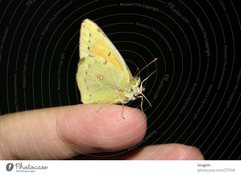 Hola, Hallo Schmetterling grün gelb zitronengelb hellgrün Fühler nah Finger Begrüßung Nahaufnahme