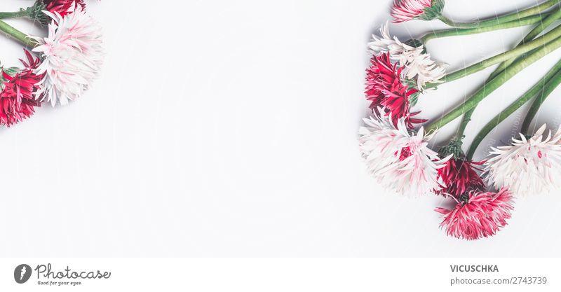Weißer Hintergrund mit rosa und weißen Blumen Lifestyle Stil Design Feste & Feiern Valentinstag Muttertag Hochzeit Geburtstag Natur Pflanze Blüte