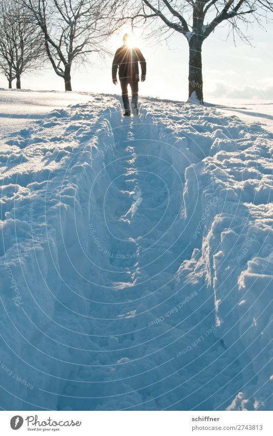 Der Sonne entgegen I Mensch maskulin 1 Umwelt Natur Landschaft Winter Schönes Wetter Eis Frost Schnee Baum gehen Tiefschnee Schneelandschaft Schneedecke