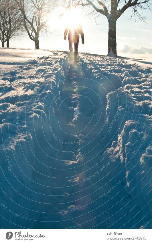 Der Sonne entgegen II Mensch Natur Landschaft Baum Winter Umwelt Wege & Pfade Schnee gehen maskulin Eis Schönes Wetter Frost Schneelandschaft aufsteigen