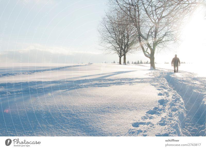 Pfadfinder Mensch maskulin 1 Umwelt Natur Landschaft Pflanze Winter Schönes Wetter Eis Frost Schnee Baum gehen weiß Schneelandschaft Schneedecke Wege & Pfade