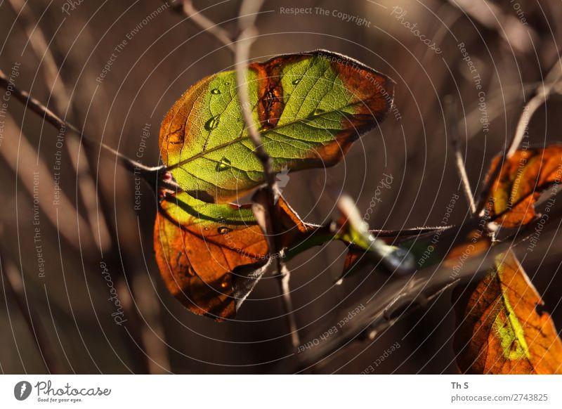 Blatt Natur Pflanze Herbst Winter Wald verblüht ästhetisch authentisch einfach elegant natürlich braun grün orange Gelassenheit geduldig ruhig Farbe einzigartig