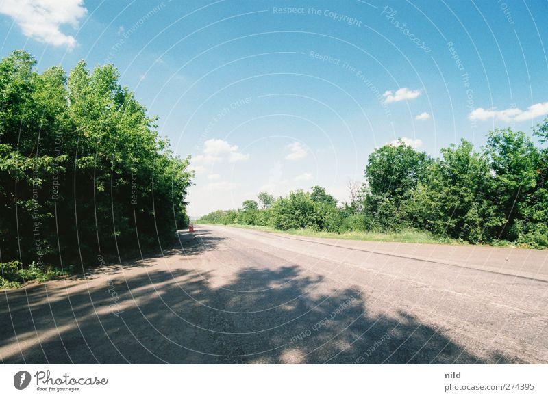 Roadtrip 2012 Ferien & Urlaub & Reisen Umwelt Natur Landschaft Sommer Wetter Schönes Wetter Grünpflanze Sträucher Verkehr Verkehrswege Autofahren Straße