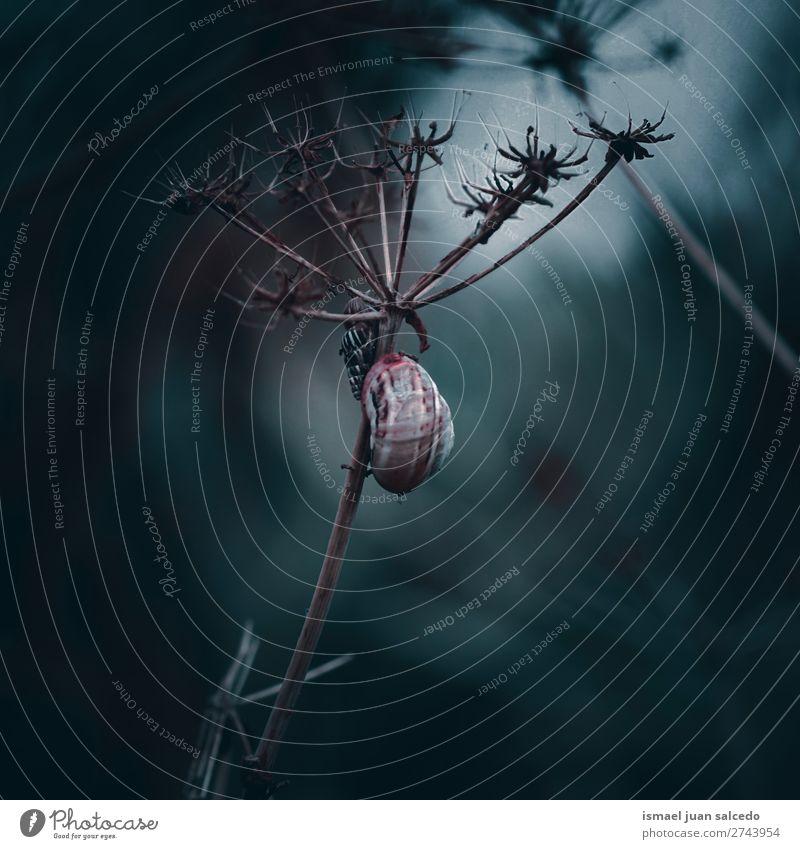 Schnecke auf der Pflanze Riesenglanzschnecke Tier Wanze Insekt klein Panzer Spirale Natur Garten Außenaufnahme Zerbrechlichkeit niedlich Beautyfotografie